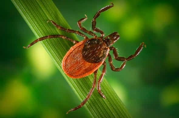 What is Lyme Disease? New Findings Deepen the Mystery